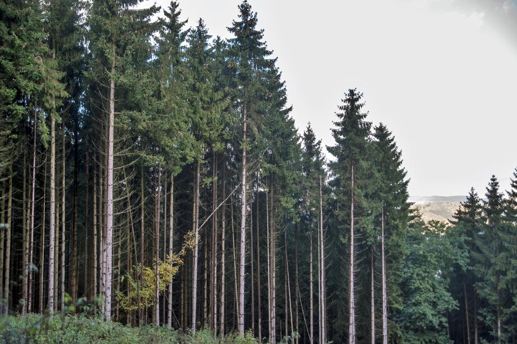 Instabiler Wald