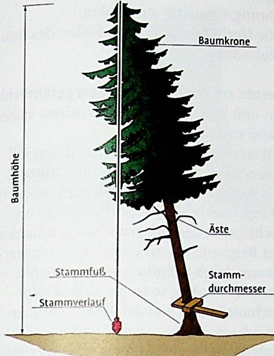 Kriterien Baumansprache