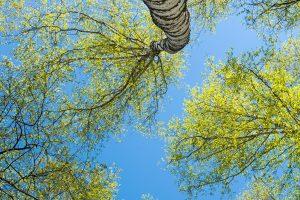 Waldwachstum