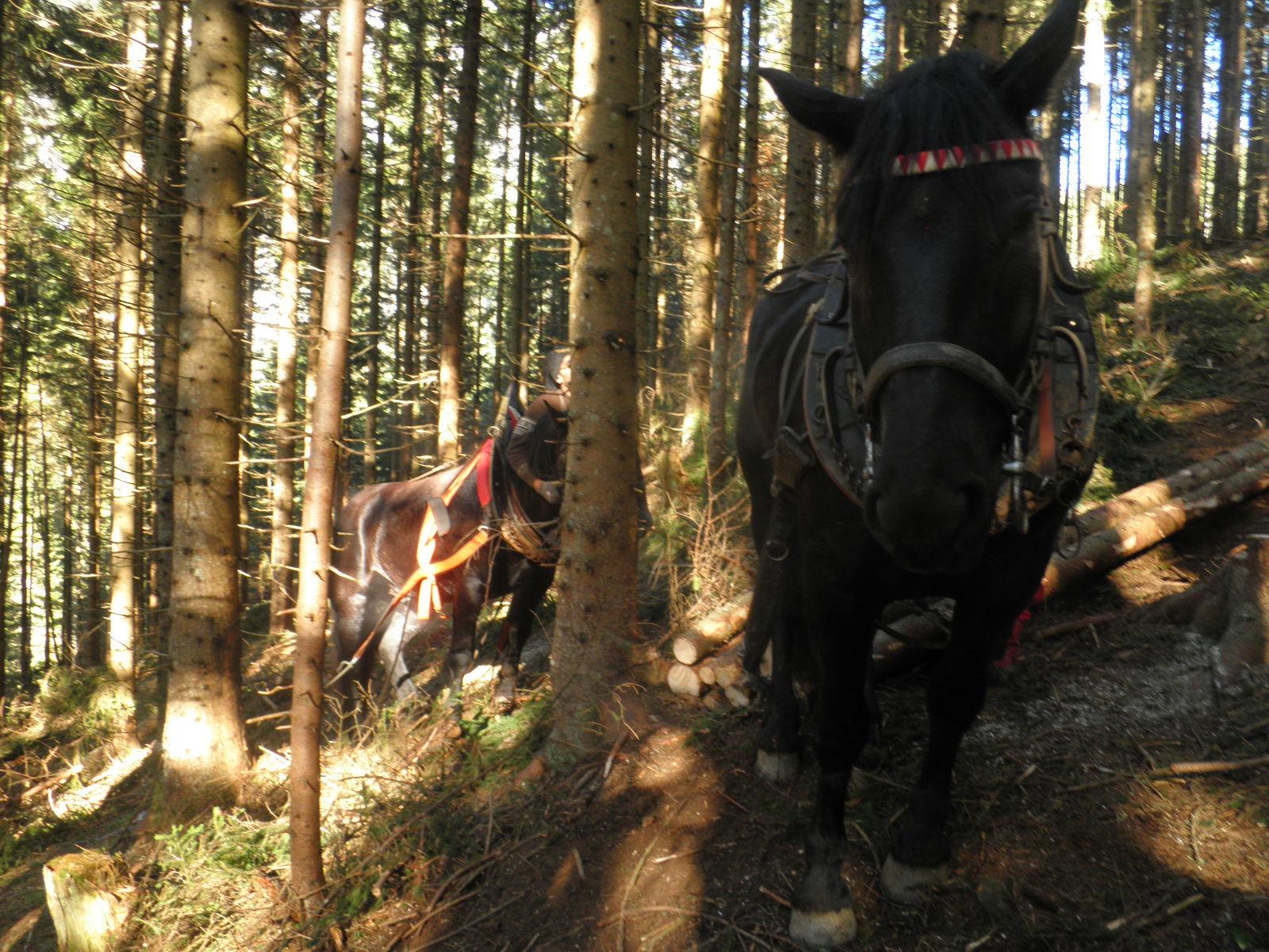 Pferderückung