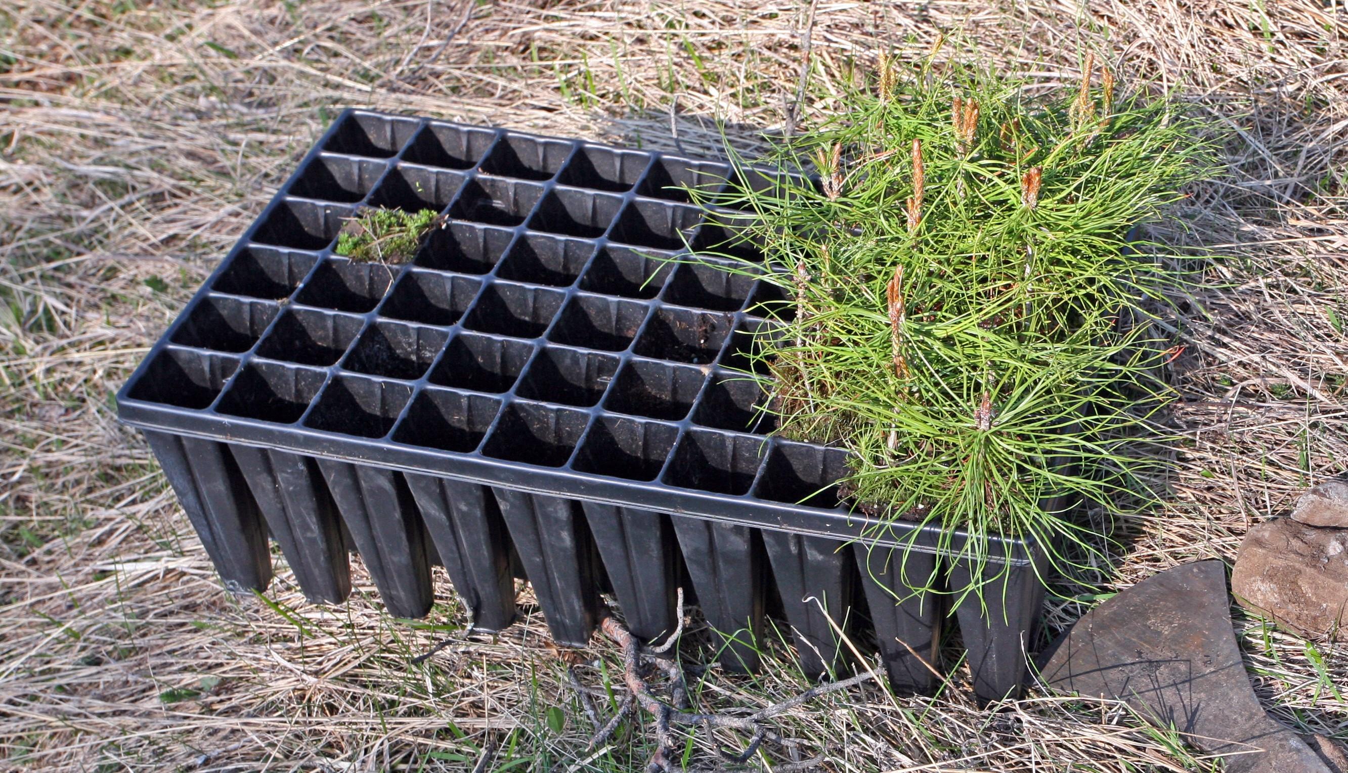 Containerpflanzen