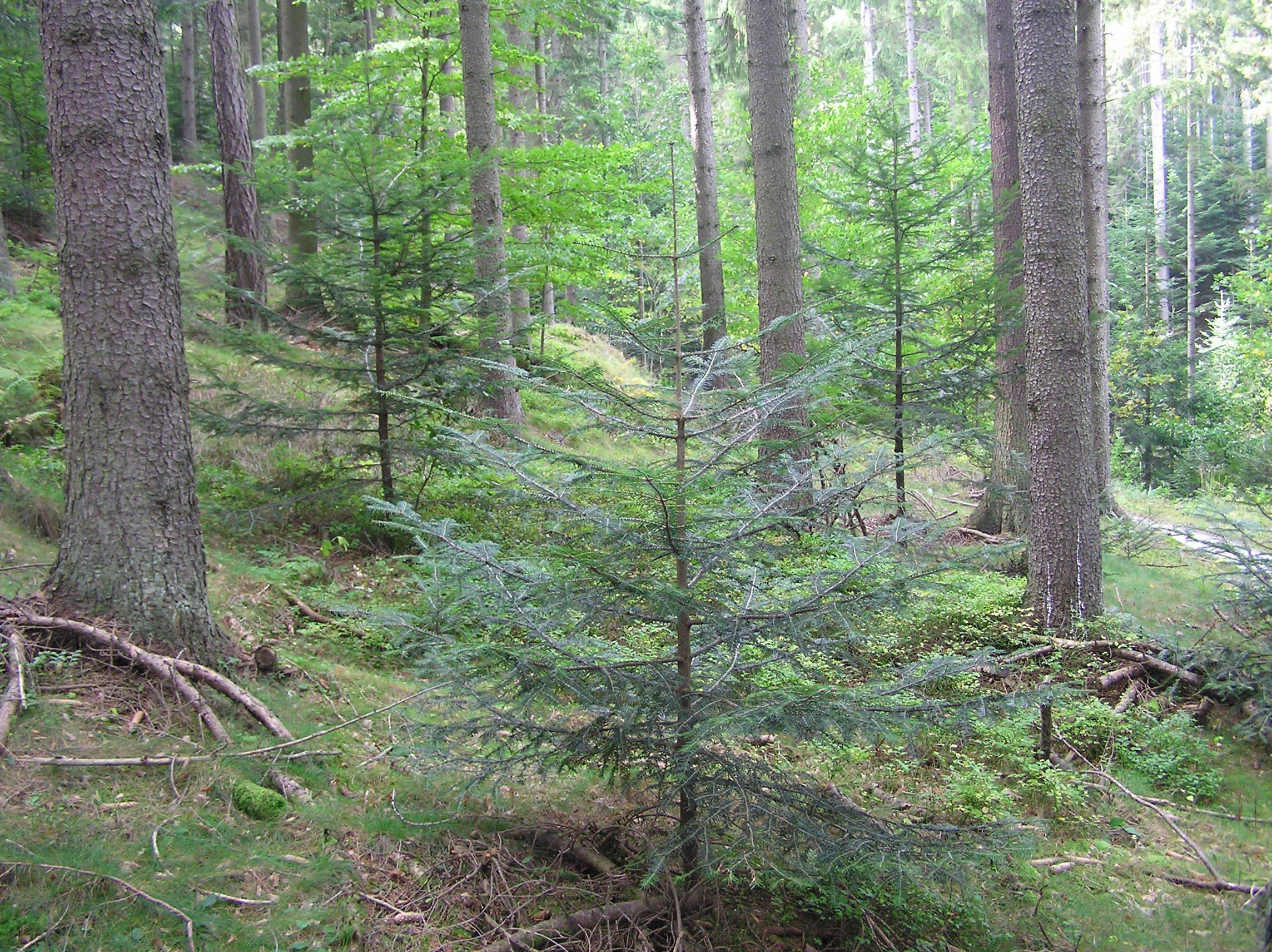 Plenterwald
