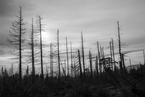 Wie krank ist der Wald tatsächlich?
