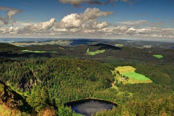 Neues Forstgesetz BW