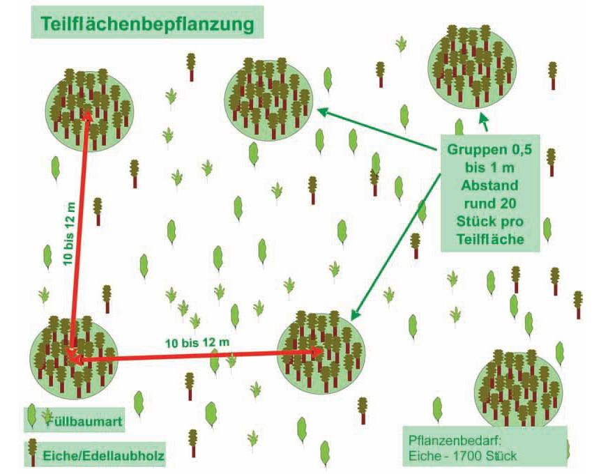 Teilflächenpflanzung.