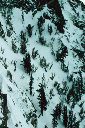 Schutzwald