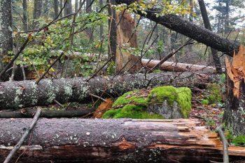 Waldschaden