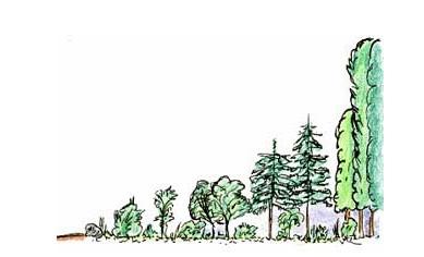 Gute Gründe für die Waldrandpflege