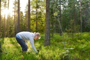 In 3 Schritten zur optimalen Baumartenwahl