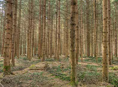 Stangenholz