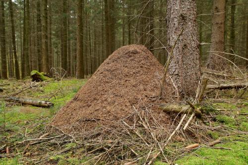 Ökologischer Forstschutz: Homöopathie im Wald?