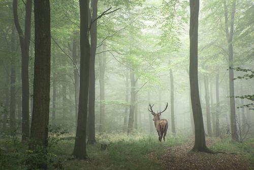 Wildgerechter Waldbau
