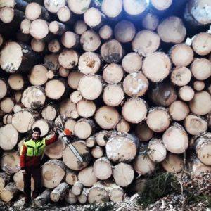 Forstarbeiten im April