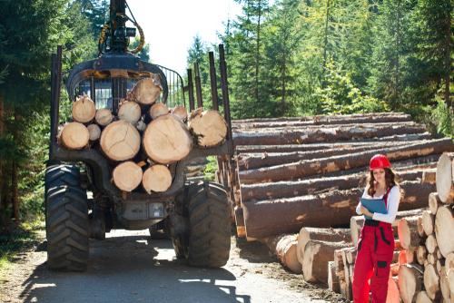 Wie bewertet man Holzernteschäden?