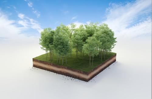 Waldböden: Was Sie unbedingt wissen sollten…