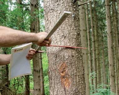 Den Holzvorrat einfach und günstig bestimmen