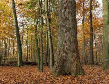 Das Risiko ist entscheidend: Baumarten betriebswirtschaftlich kalkuliert