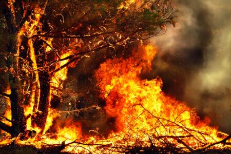 Aktuell höchste Waldbrandgefahr in sechs deutschen Bundesländern