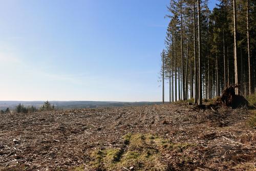Bewässerung von Wäldern