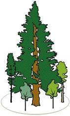 Plentern: Waldbau für den Klimawandel