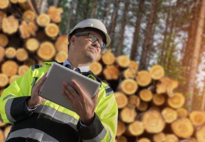 Investitionsprogramm Wald: Leider nein für private Waldbesitzer