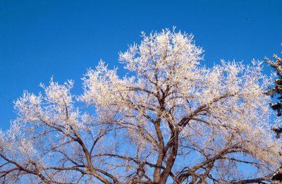 Baumartenwahl und Frosttoleranz