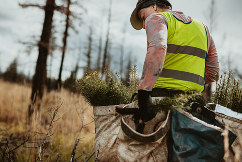 Ö: 350 Millionen für klimafitte Wälder bereitgestellt
