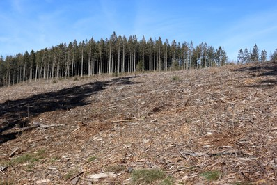 Forstwirtschaft erlitt Schäden in Milliardenhöhe