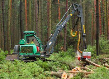 Forstarbeiten im Oktober