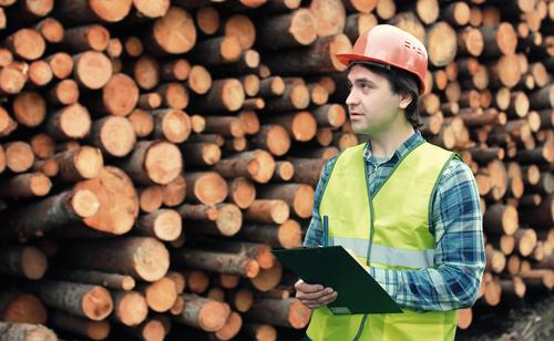 Boom am Holzmarkt: Abwarten oder Einschlag erhöhen?