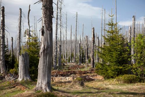 Waldschutzsituation 2020/2021: So krank ist er Wald aktuell