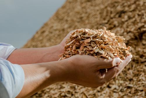 Biomasse aus Holz: Mehr als nur ein Nebenprodukt